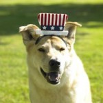 dog-uncle-sam-hat
