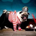 Dog Pirate Costume Pirate