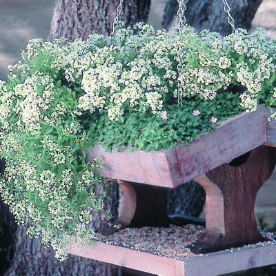 Flowering Bird Feeders Plans