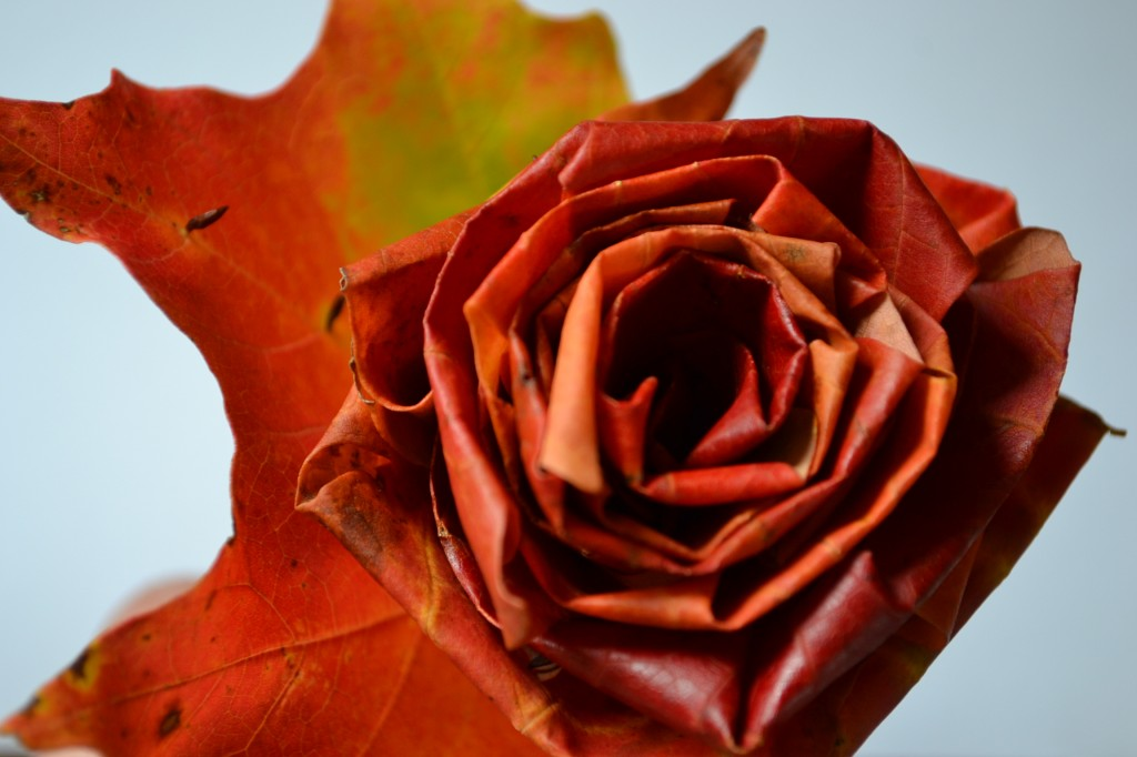 Fall Maple Leaf Roses