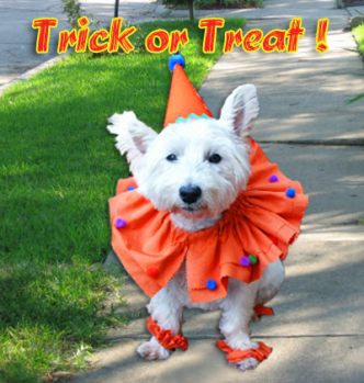 Halloween Clown Dog costume Tutorial