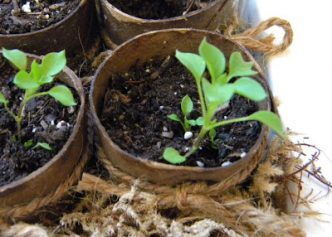 Paper Towel Roll Plant Seedling Pots