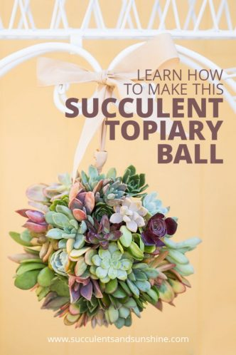 How to Make a Succulent Ball Topiary